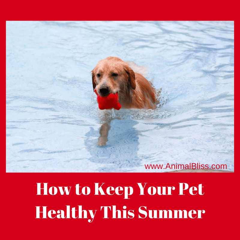 Our pets count on us to keep them safe. Here are a few things you can do to keep your pet healthy this summer.