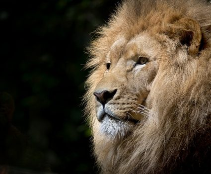 4 Famous African Animals That Have Made an Impact on the World