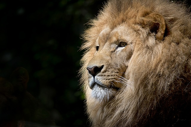 A look at 4 famous African animals that have left their print on the world. Poaching has greatly reduced the number of these majestic beasts.