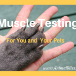 Muscle Testing for You and Your Pets: Find the Best of Anything
