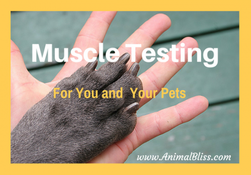 Muscle Testing for You and Your Pet: Finding the Best of Anything by muscle testing