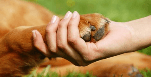 Muscle Testing for You and Your Animals: Find the Best of Anything for You or Your Pet!