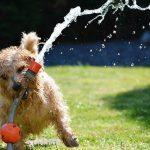 Tips to Grow a Pet-friendly Non-toxic Garden