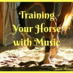 Training Your Horse with Music, Equestrian Training Technique