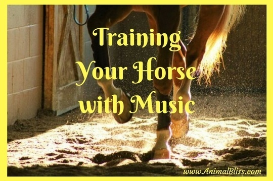 Training your horse with music will eliminate strict, dull and routine sessions.