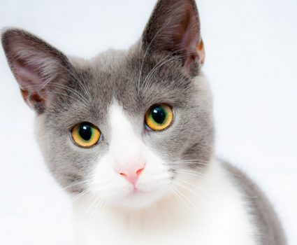 To Buy or Adopt? How to Save the Life of a Cat