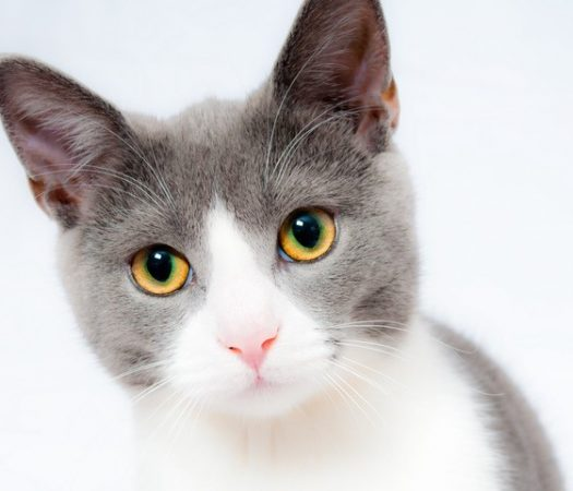 You want a cat but can't decide whether to buy or adopt. Are breeders a responsible choice?