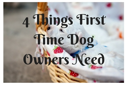 4 Things First Time Dog Owners Need