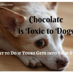 Chocolate is Toxic to Dogs: What to Do if Yours Gets into Your Stash