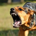 There is No Cure for Rabies – a Dangerous Lethal Virus