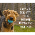 4 Ways To Deal With Pests Without Endangering Your Pets