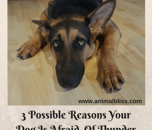3 Possible Reasons Your Dog Is Afraid Of Thunder