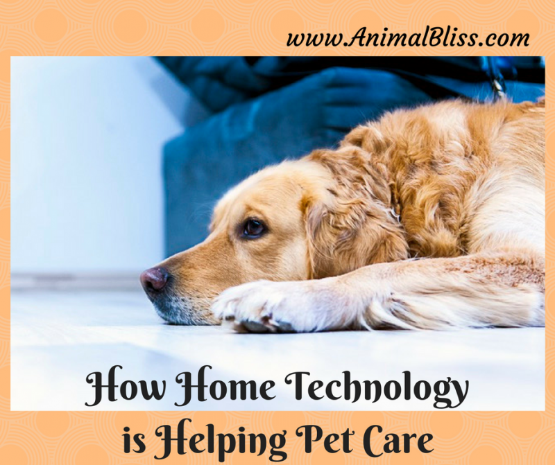 How Home Technology is Helping Pet Care