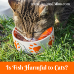 Is Fish Harmful to Cats? Thiamine Deficiency in Cats