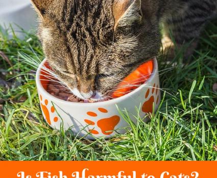 Is fish harmful to cats? Cats love fish but it's not natural food for them. Raw fish may put cats in danger of developing thiamine deficiency,