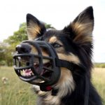 Vicious Canine: Why You Need to Take Legal Action After a Dog Bite