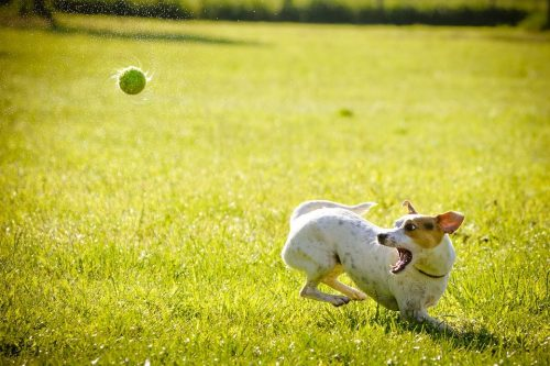 How to properly engage your dog in the training process