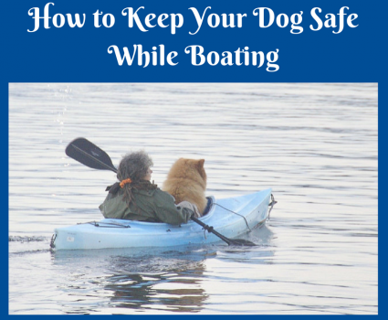 How to Keep Your Dog Safe While Boating this Summer