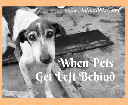 When Pets Get Left Behind, How You Can Help