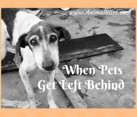 When Pets Get Left Behind, What You Can do to Help - www.AnimalBliss.com