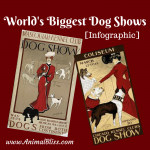 World's Biggest Dog Shows [Infographic]