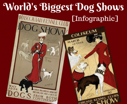 The World's Biggest Dog Shows infographic profiles world-famous shows and gives pointers for potential exhibitors entering their dog in a show. - www.animalbliss.com