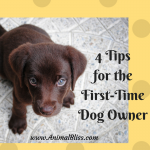 4 Tips for the First Time Dog Owner – For the Love of Pups