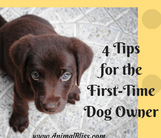 Follow these tips for the first time dog owner to meet the needs of your new pup.