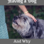 5 Health Benefits of Having a Dog, Why You Should Have One