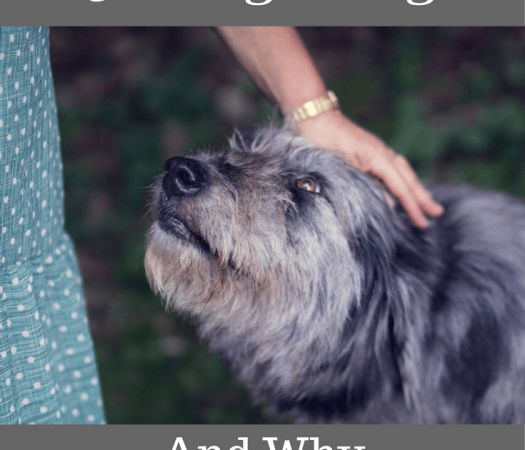 5 Health Benefits of Having a Dog and Why You Should Have One
