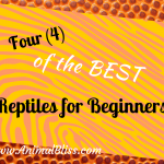 4 of the Best Reptiles for Beginners to Help You Decide