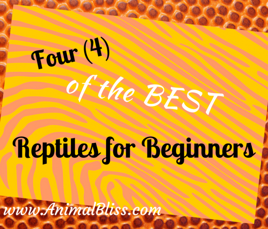Four of the Best Reptiles for Beginners - www.AnimalBliss.com - @animal_bliss