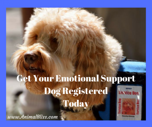 Get Your Emotional Support Dog Registered Today