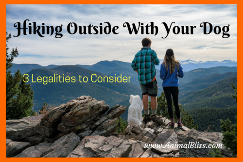 Hiking Outside With Your Dog: 3 Legalities to Consider