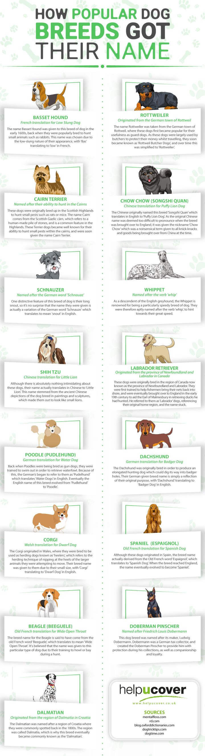 How Popular Dog Breeds Got Their Names Infographic