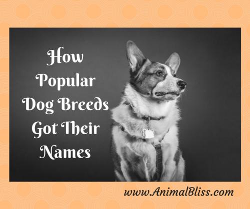 How Popular Pet Breeds Got Their Names
