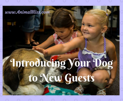 Tips for Safely Introducing Your Dog to New Guests