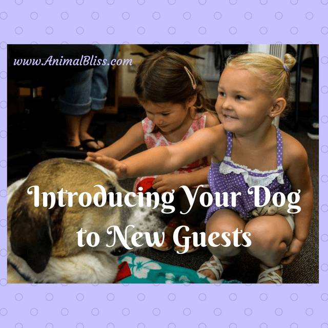 Introducing your dog to new guests? Is your dog the nervous type? Read these tips.