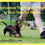 Most Common Dog Training Mistakes of First-Time Pet Owners
