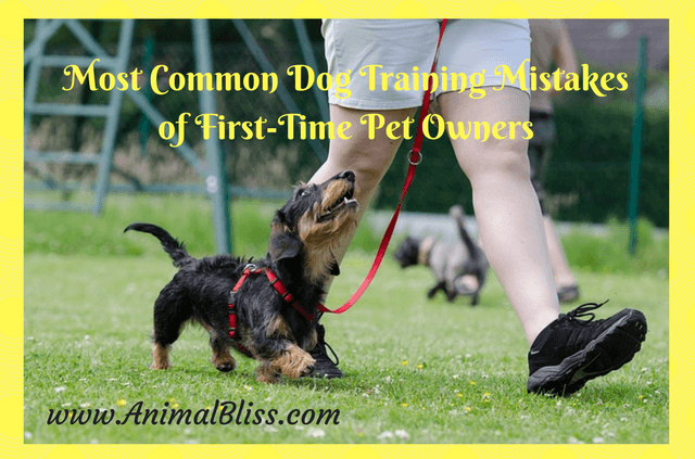 Avoid these most common dog training mistakes you could make that could lead to a dog that is very difficult to live with.