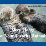 Sleep Hacks of Your Favorite Animals [Infographic]