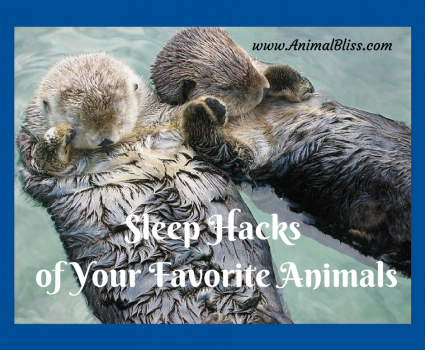 Do you know the sleep hacks of your favorite animals? Check out fun graphic which covers a broad range of species from the animal kingdom.