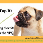 Getting a Pup? Top 10 Dog Breeds in the UK