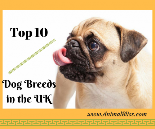 Top 10 Dog Breeds in the UK