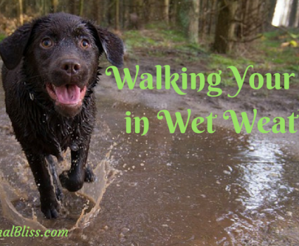 Walking Your Dog in Wet Weather: Tips to Keep them Safe