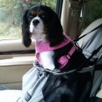 Ways to Keep Your Dog Safe in the Car (All Year Round)