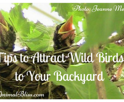 Tips to Attract Wild Birds to Your Backyard: Become a Bird Watcher