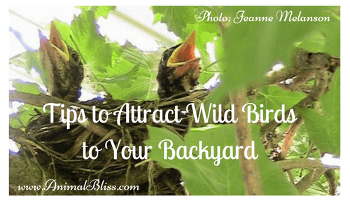 Tips to Attract Wild Birds to Your Backyard