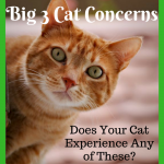 Big 3 Cat Concerns: Is Your Cat Experiencing Any of These?