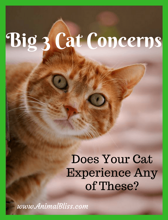 Does your cat experience any one of these big 3 cat concerns? Read this to find out what you can do with a diet of Weruva OMG! Cat Food.